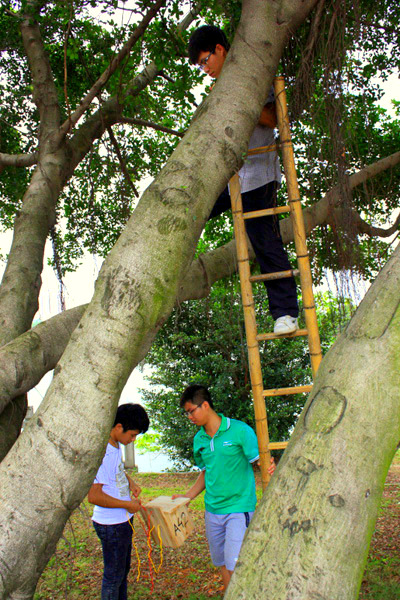 Putting up nest boxed. In tree: Chao He. On right on ground: Ming Li. On left: Biao Li.
